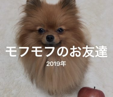 iphone メモリー紹介 習慣