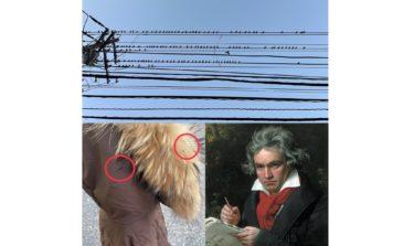 【ベートー便⁉】『鳥糞害な「運命」バ・バ・バ・バード♪』習慣