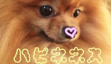 【ハピネネス!!!!!!!!!】7月20日『ハッピーバースねね』習慣